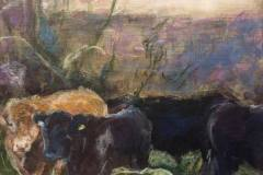 Irish bullocks